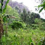 Bobikuma mountain